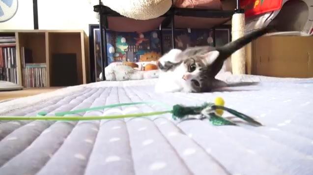 オモチャへ向かう猫