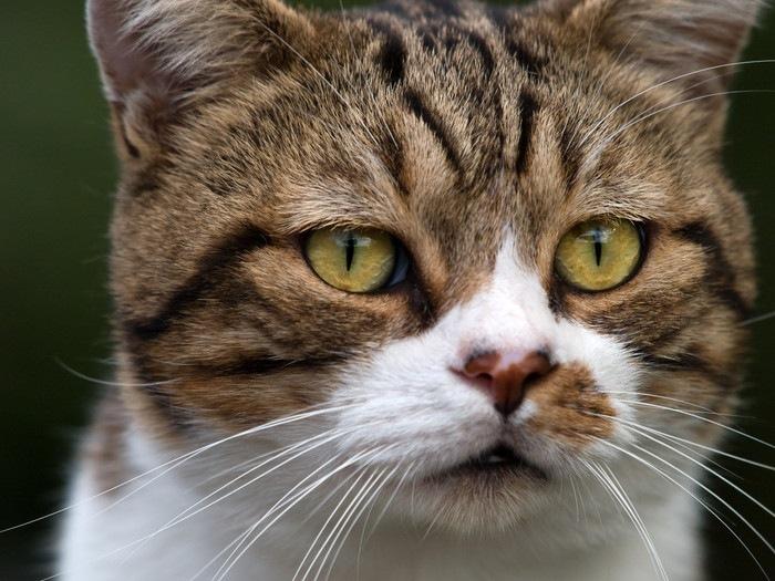とぼけた顔をしている猫