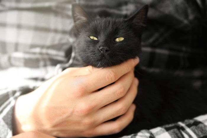 人に抱かれる黒猫