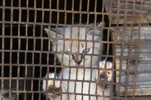 網の中に猫