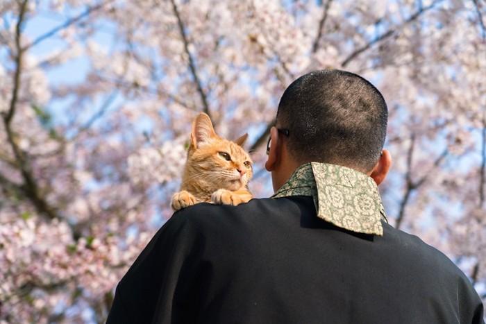 お寺の住職さんに抱かれている茶トラ猫