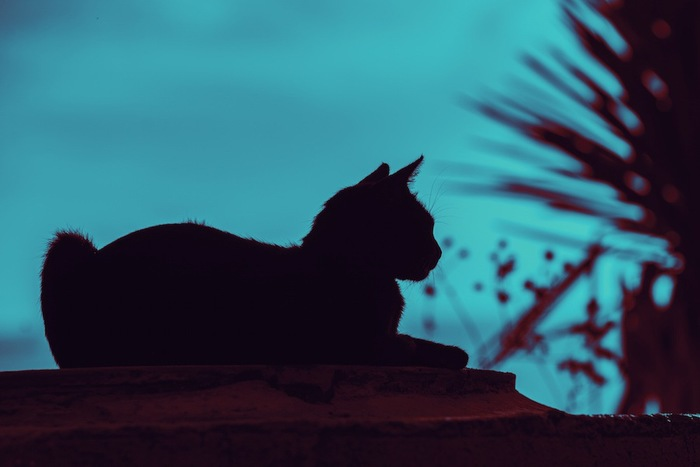 暗がりの中の猫のシルエット