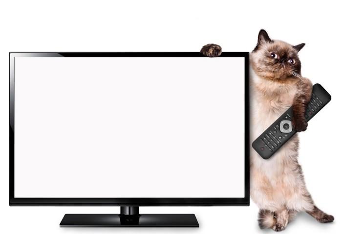 テレビに寄りかかる猫