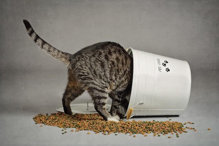 頭からストッカーに入る猫