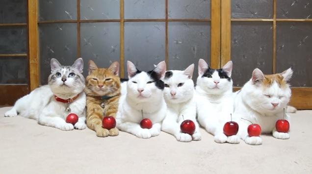 手にリンゴを乗せられた猫達