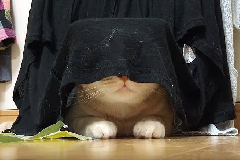 鼻と口だけが見える猫