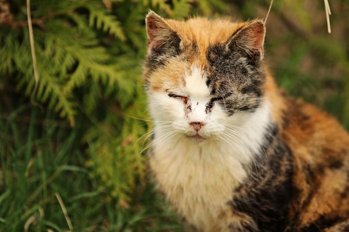 感染症の猫