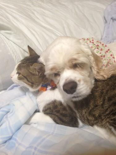 捨て猫千代と愛犬めいぷる