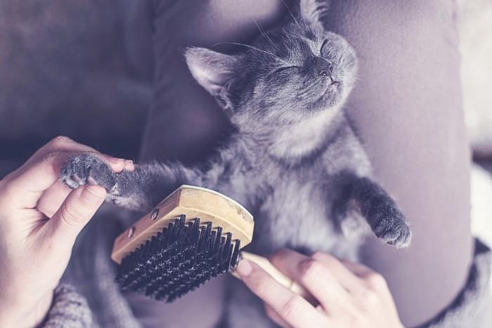 ブラシでこすられる猫