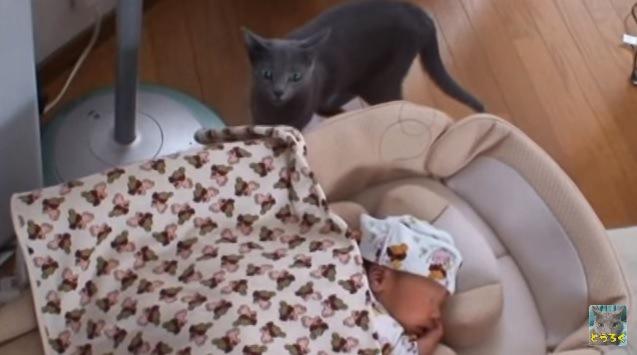 画面奥で赤ちゃんを見ている猫