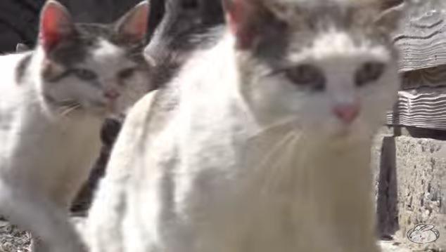猫2匹のアップ