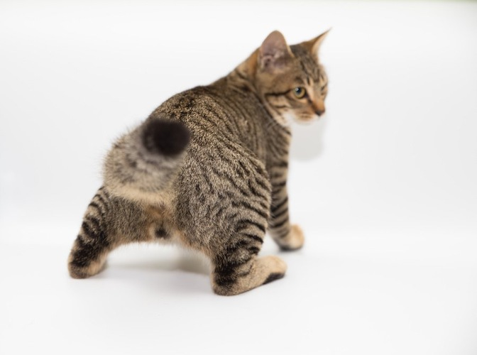 後ろを向いた猫のお尻