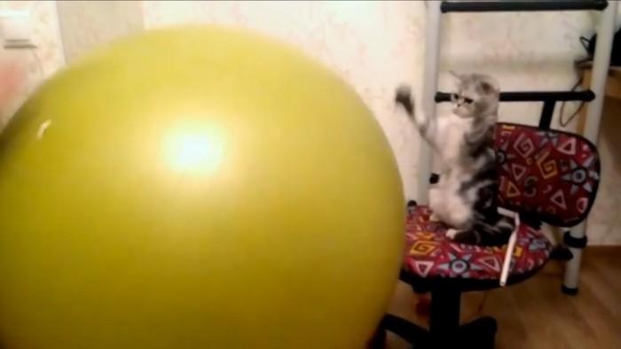 ちょっとびびる猫