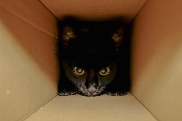 箱の奥に隠れる黒猫