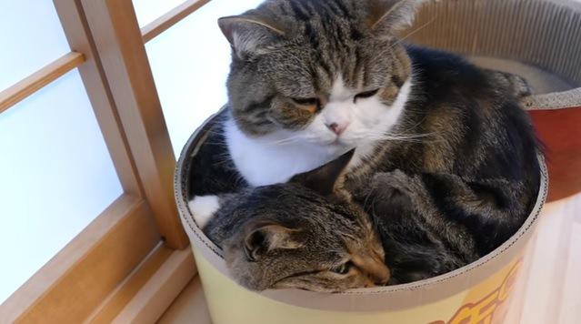 段ボールに入る猫たち(横から撮影)