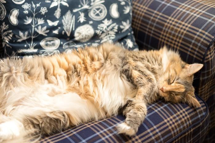 ソファーに仰向けで寝る猫