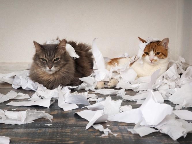 紙クズで遊ぶ猫達