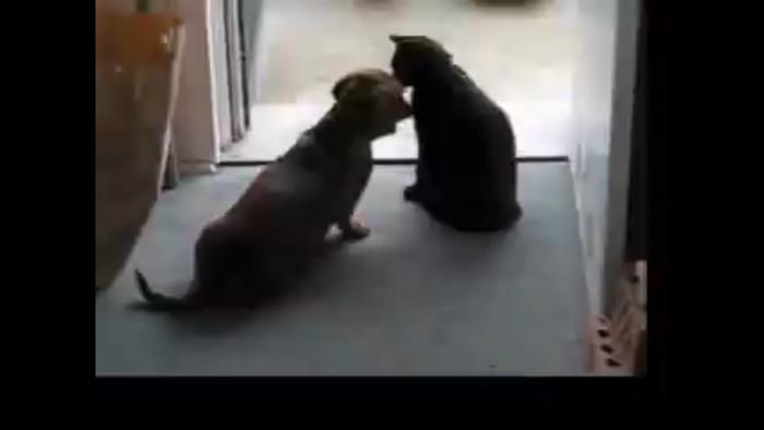 猫に近づく犬