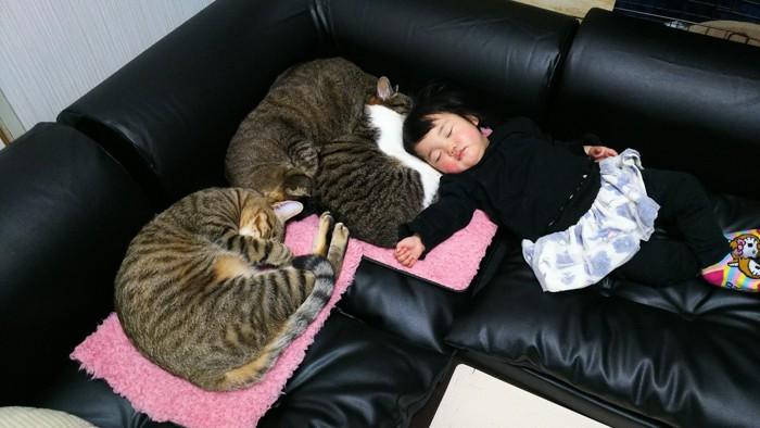 猫と女の子寝てる写真