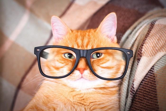 眼鏡をする猫