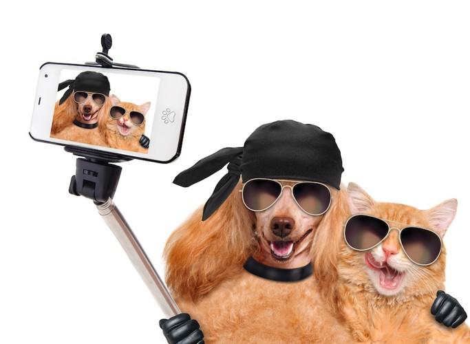 サングラスをして自撮りする犬と猫