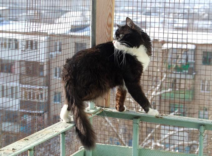 ベランダの手すりに乗っている猫