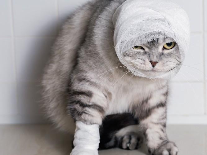 足と顔に包帯を巻いた猫