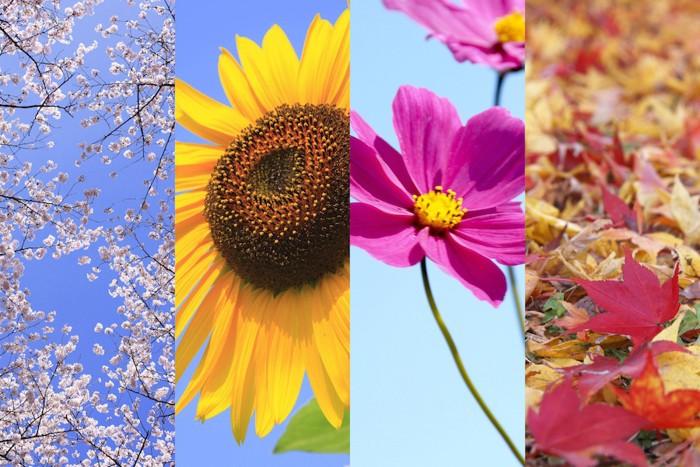 春夏秋冬の花