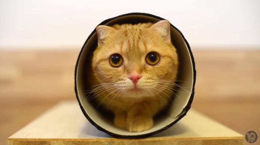 筒に入る猫の顔アップ