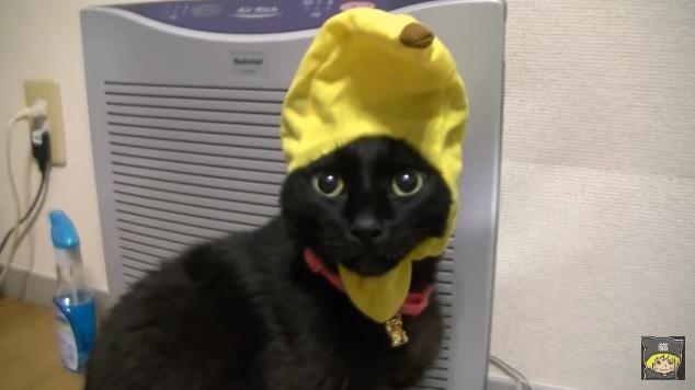 黄色い被り物の黒猫(正面)