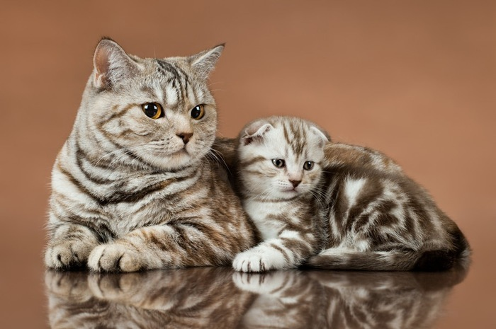 立ち耳の母猫と折れ耳の子猫