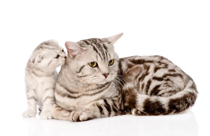 メス猫と子猫