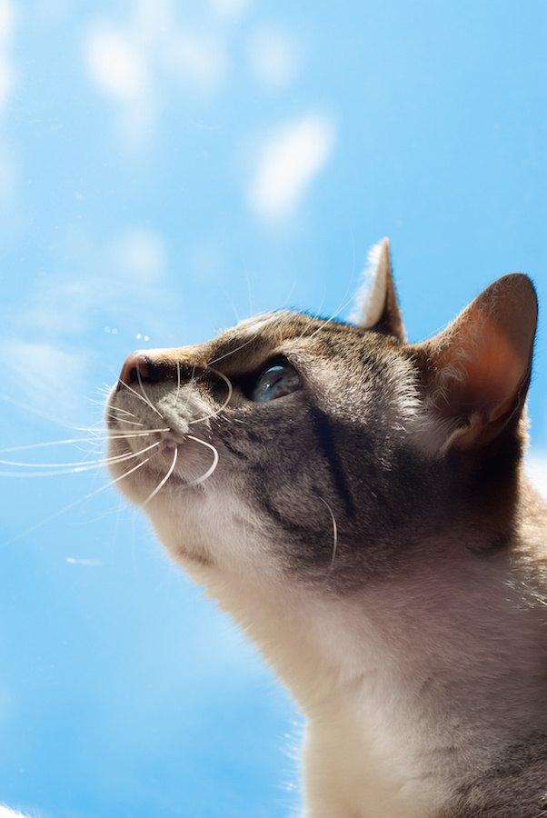死んだ後空を見つめる猫の横顔