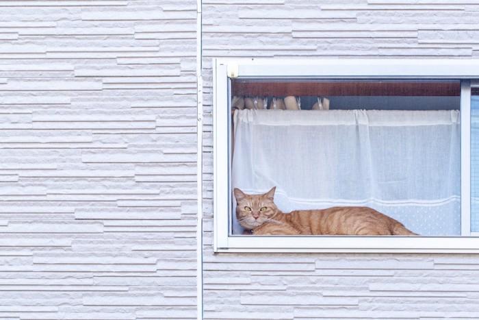 網戸越しに窓辺でくつろぐ猫
