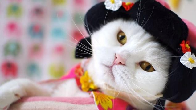 かつらをつけた白猫