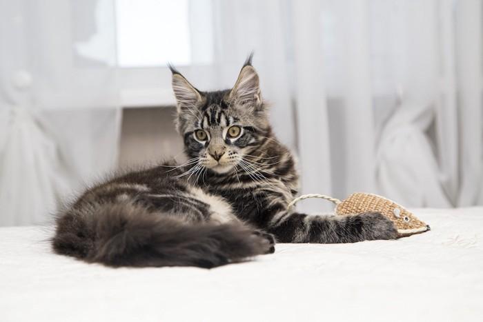 ねずみのおもちゃと耳の大きな猫