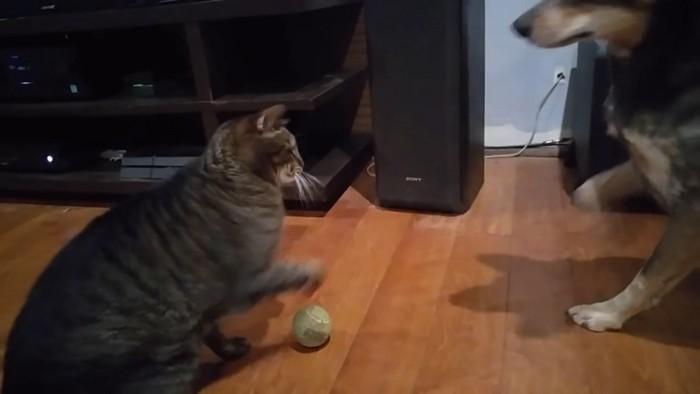 ボールを渡さない猫