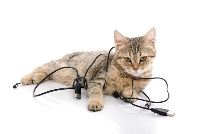 コードがからまった猫