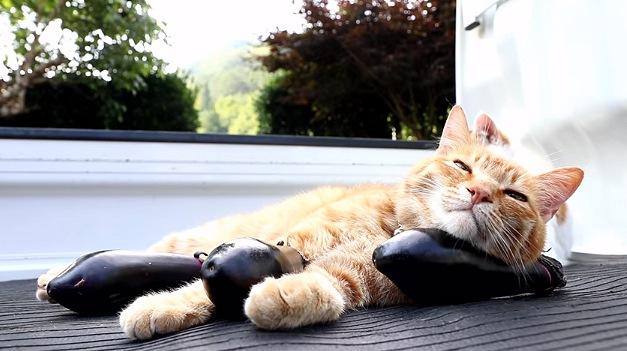なすを枕にうとうとする猫