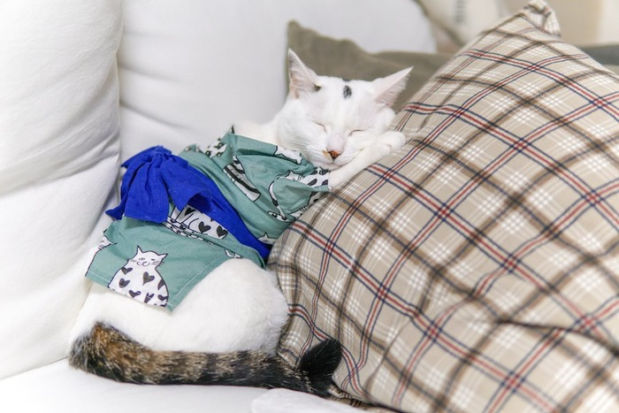浴衣を着てクッションの上で眠る猫