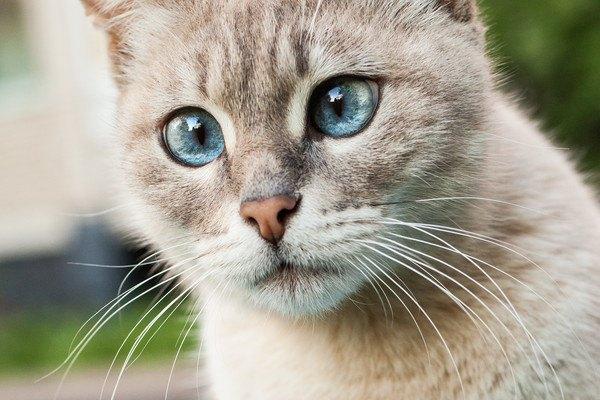ビックリの猫