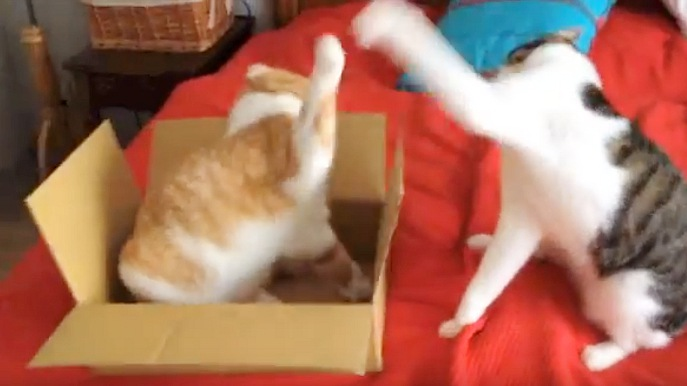 茶色の猫ちゃんのネコパンチ