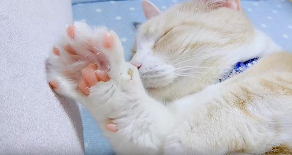眠る白猫と肉球
