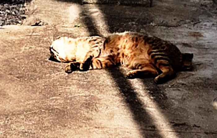 猫が寝そべっている写真