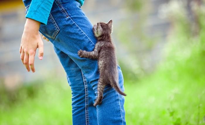 人の足によじ登る子猫