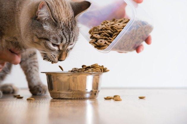 安い餌を食べる猫