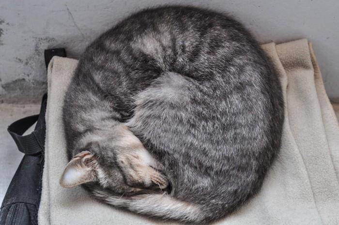 丸くなる野良猫