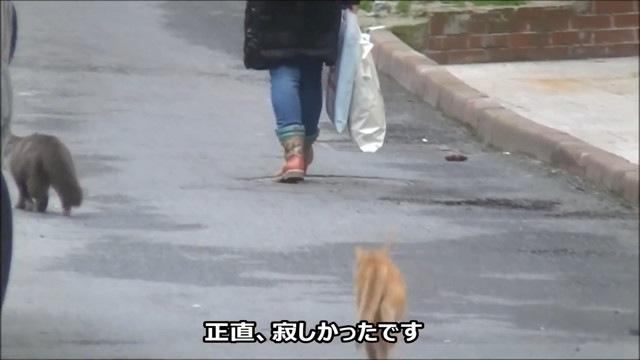 猫の後を追いかける猫