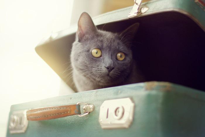 スーツケースから顔を出す黒猫