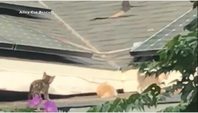 走り回る子猫たち